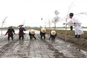 伊勢神宮への献上米を5人の早乙女が手植えした