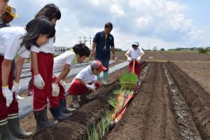 農業体験で小学生が地元名産のネギの苗を簡易移植機で定植
