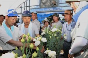 生産者が出荷間近のトルコギキョウの規格を確認
