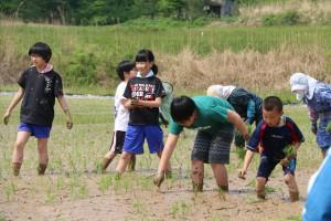 小学生がモチ米の田植え体験。米は卒業式で赤飯にする予定。