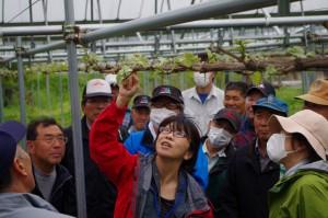 実りある秋のためにシャインマスカットの栽培講習会を開催