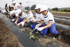 小学生が野菜定植。野菜の売り上げは復興支援募金へ