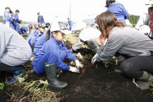 児童たちがサツマイモを収穫。地元で販売し、売り上げは熊本県や東日本大震災の被災地へ寄付する