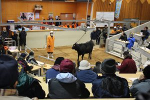 あきた総合家畜市場で行われた今年の初セリ