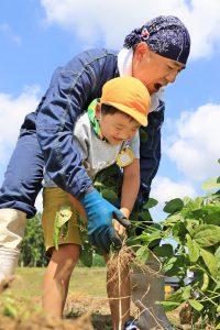 同JA職員と力を合わせて枝豆を収穫する園児