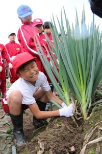 小学生による収穫体験の様子