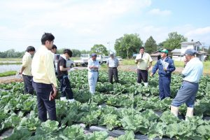 圃場でキャベツの生育を見ながら講習会に参加する生産者